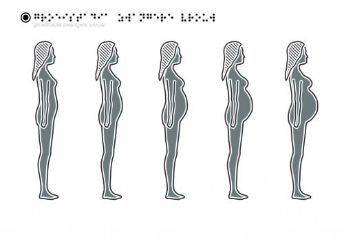 Groeistadia Zwangere Vrouw