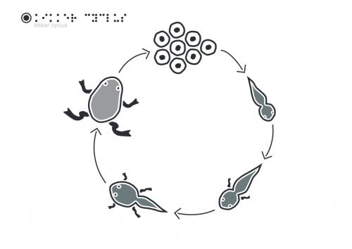 Kikker-cyclus.pdf-1024x724